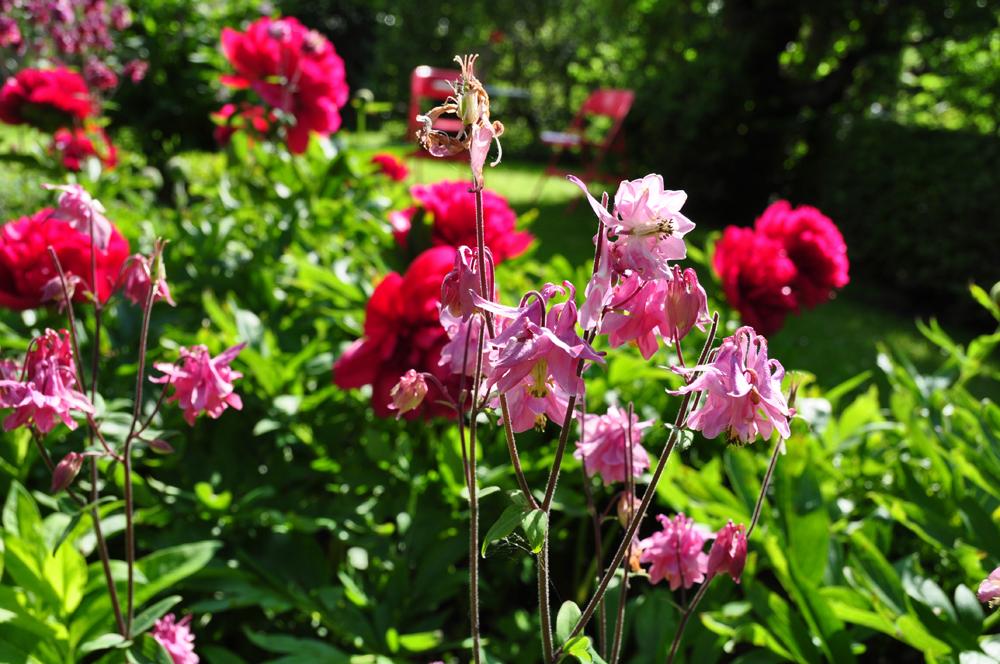 Gartentage-Erdakupunktur-6