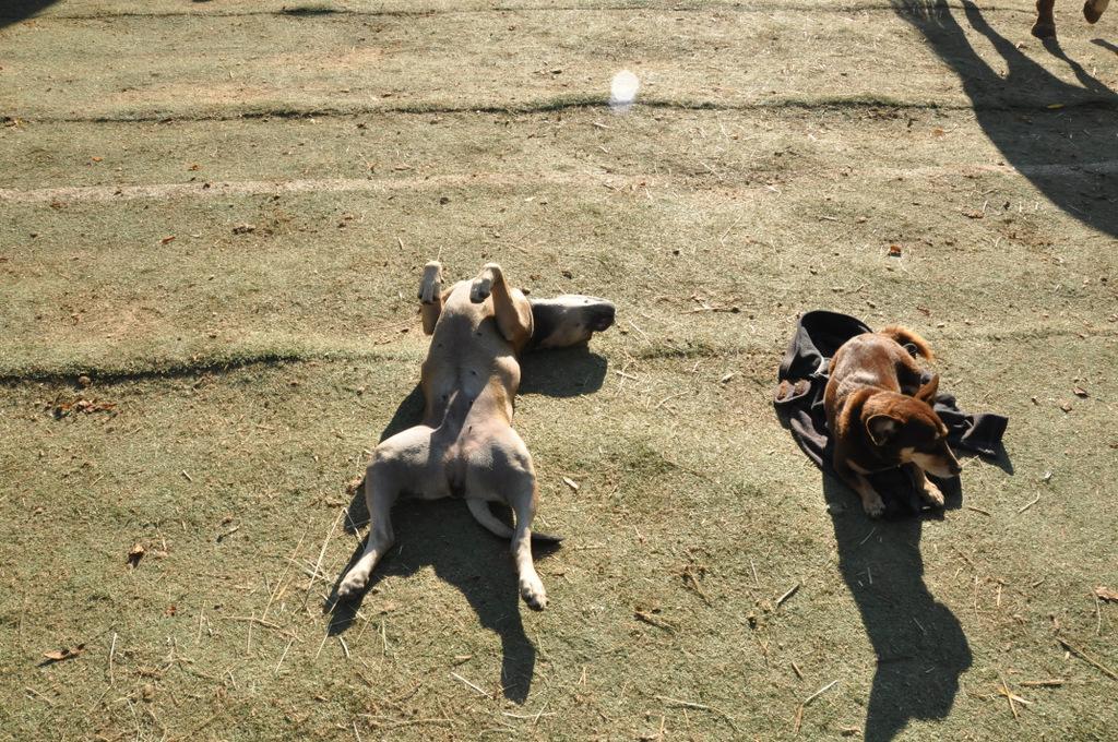 erdakupunktur_pferdehof-hunde fühlen auf einem Ort der Kraft