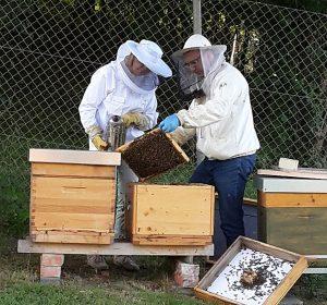 Bienen-Andrea Weiler