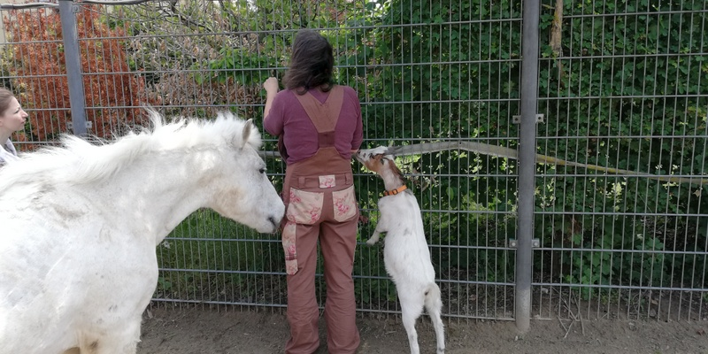 Erdakupunktur-Tiere-A.Weiler
