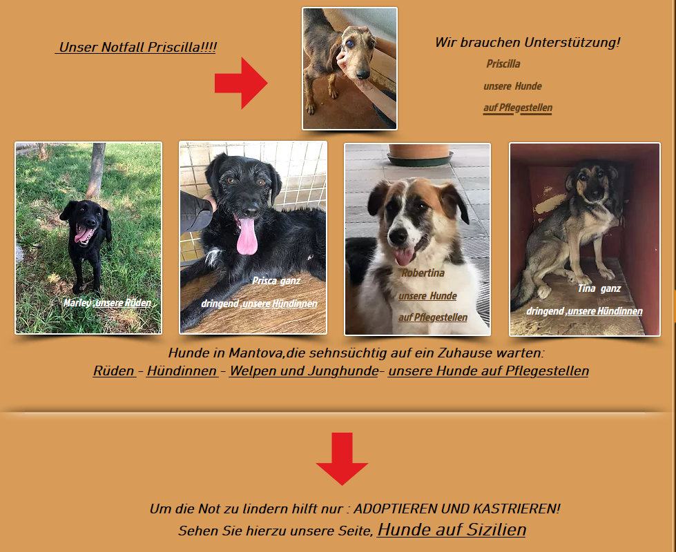Animal Rehoming wir helfen Tieren in Not -Erdakupunktur